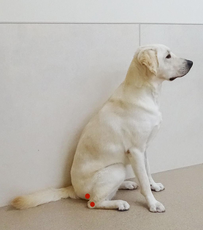 座り 方 犬