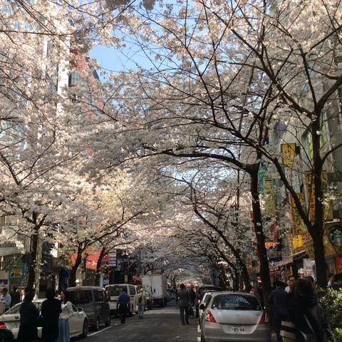 桜魅惑その2