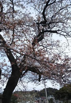 眠くなる春