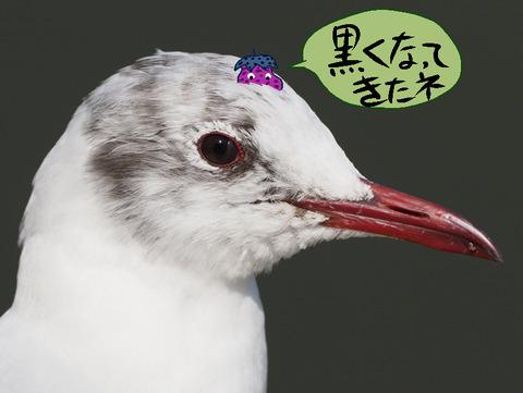 yurikamome-nasu
