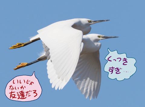 kosagi-tomo