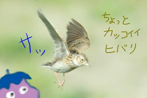 hibari-nasu