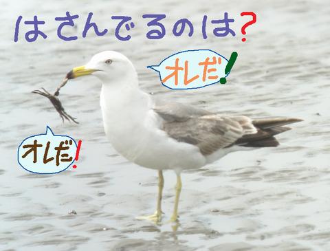umineko-kani