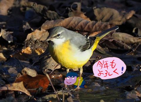 kisekirei-nasu
