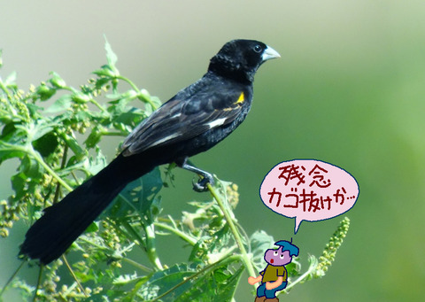 hajirohouou-kagonuke