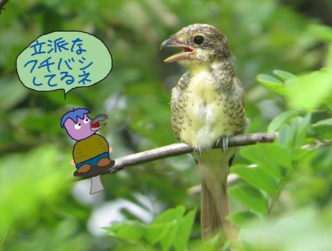 chigo-kuchibashi