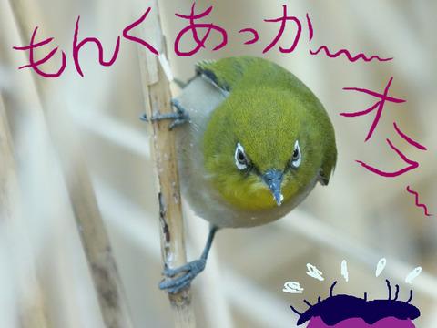 mejiro-monku