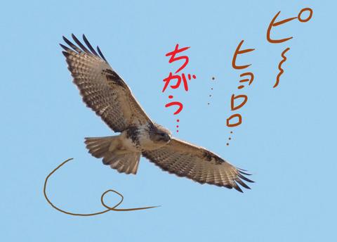 nosuuri-chigau