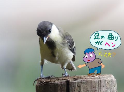 shiju-hen