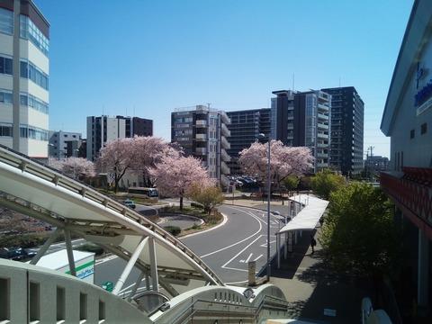 IMG_桜