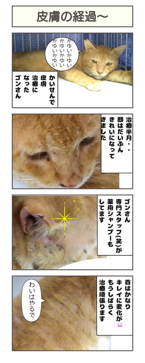 皮膚の経過