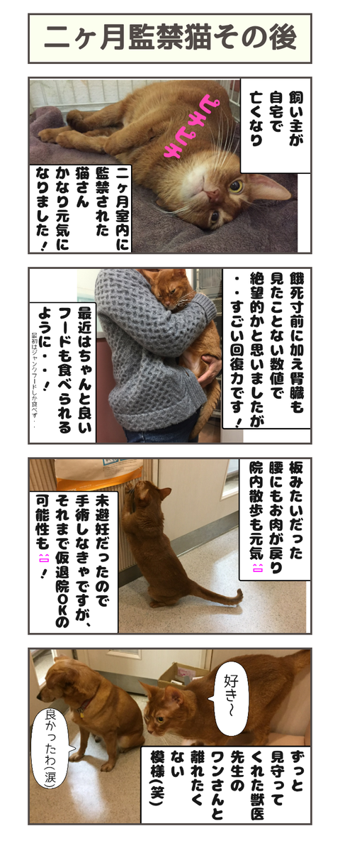二ヶ月監禁猫その後20190424102229