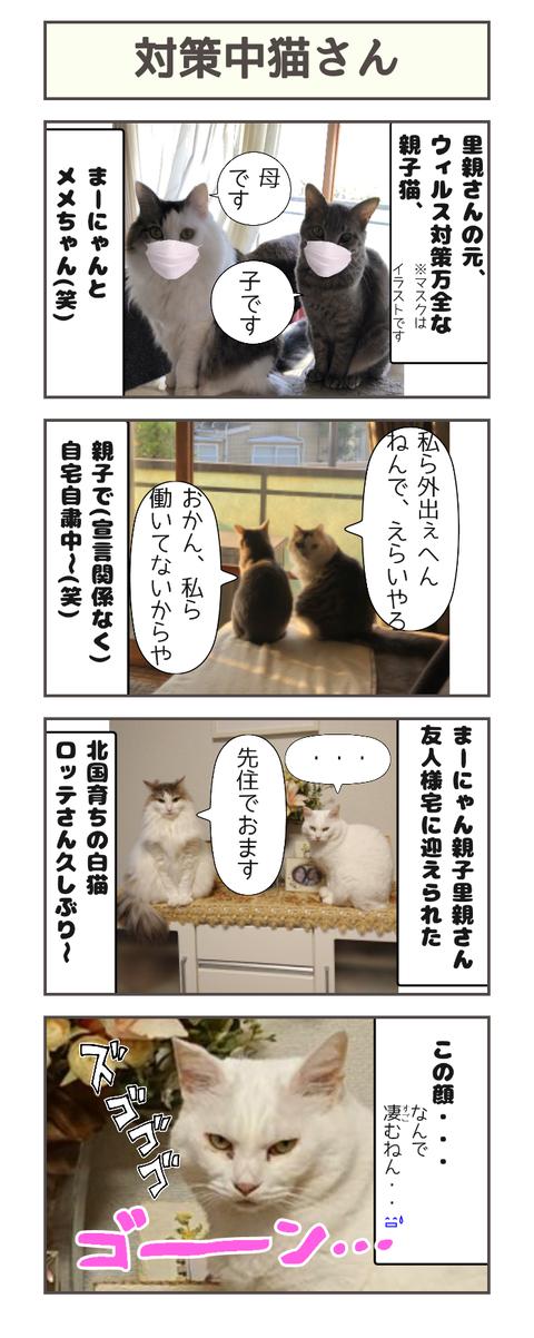 対策中猫さん20200511150808