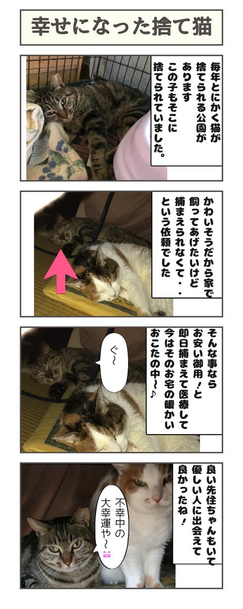 幸せになった捨て猫20190322095520