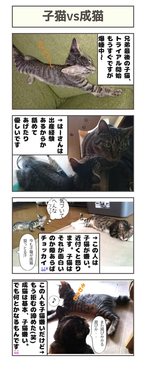 子猫vs成猫