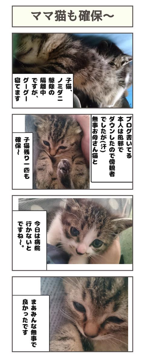 ママ猫も確保〜20190423110911