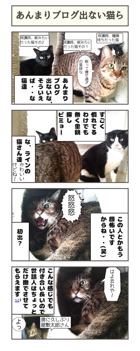 あんまりブログ出ない猫達