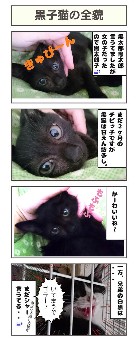 黒子猫の全貌