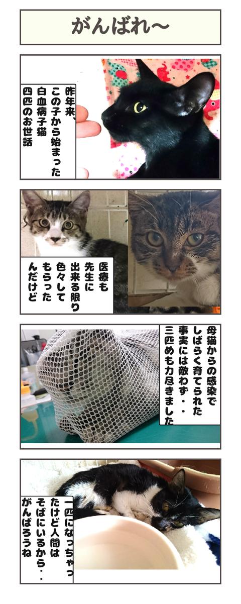 がんばれ〜20190224130149