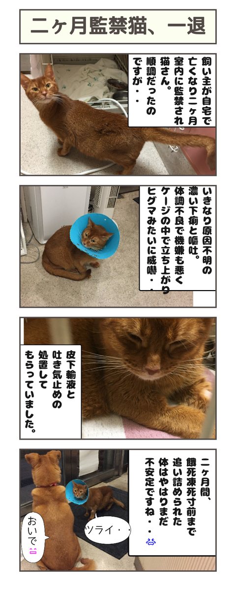二ヶ月監禁猫、一退20190428115949