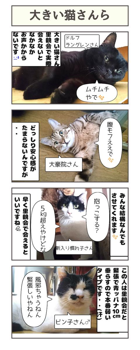 大きい猫さんら20200427133540