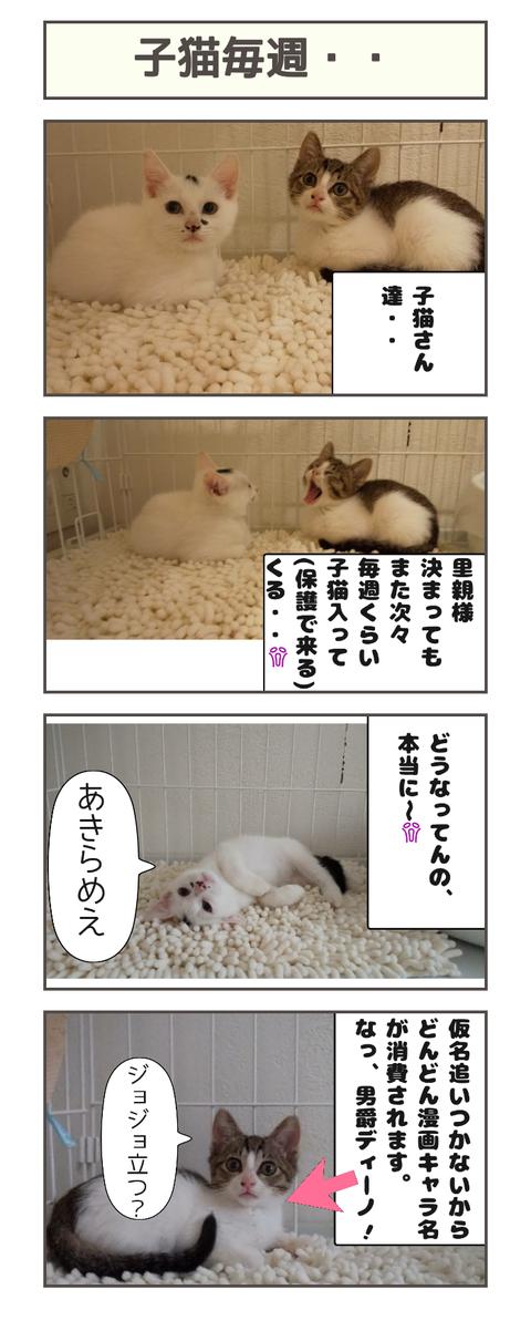 子猫毎週・・20190919115224