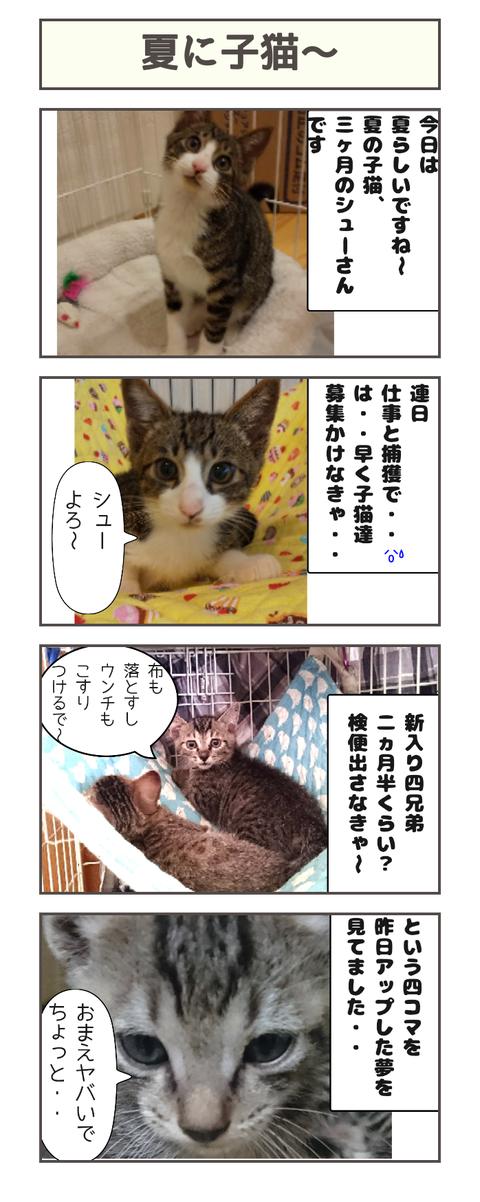 夏に子猫〜20190727151756