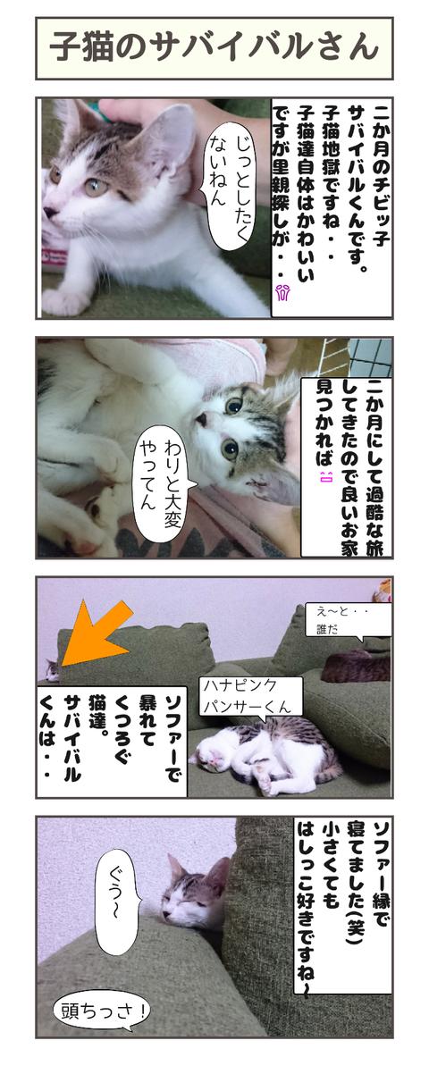子猫のサバイバル