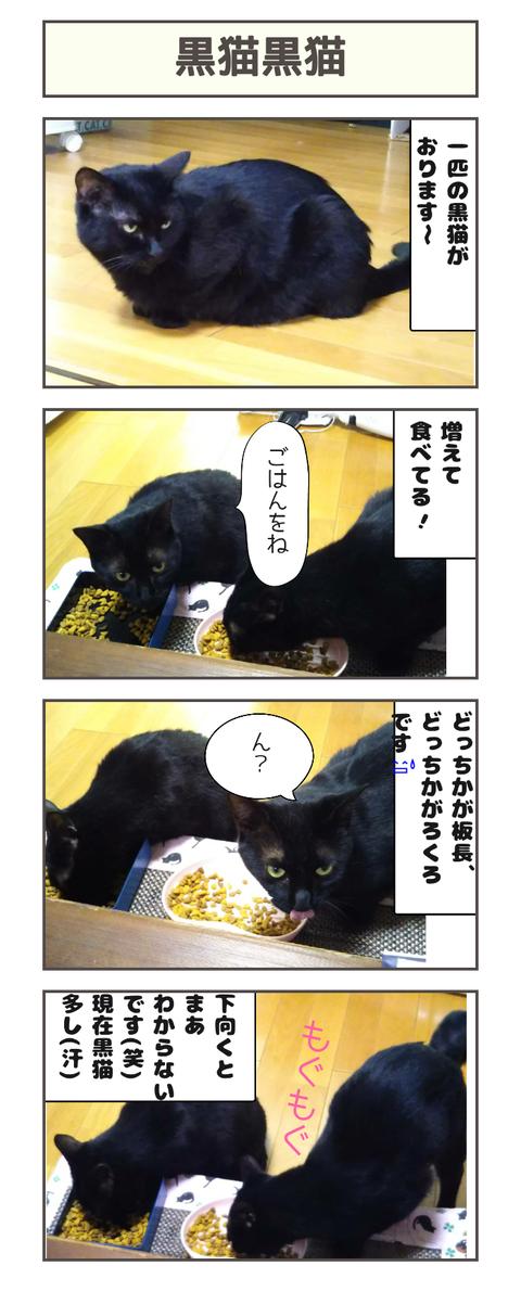 黒猫黒猫20190516113136