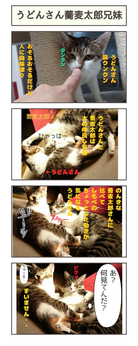 うどん蕎麦太郎