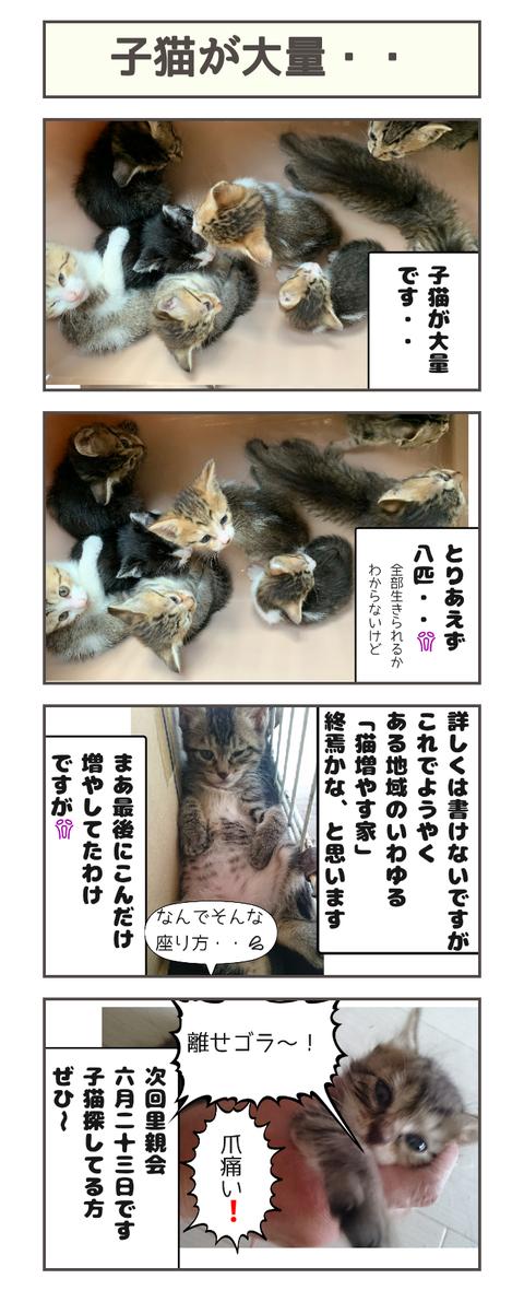 子猫が大量・・20190525124120