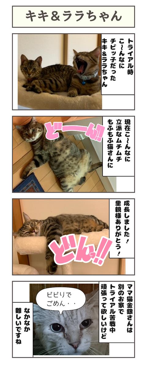 キキ&ララちゃん20191123143037