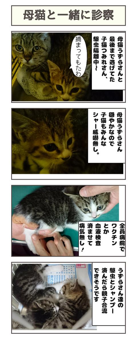 母猫と一緒に診察20190425112955