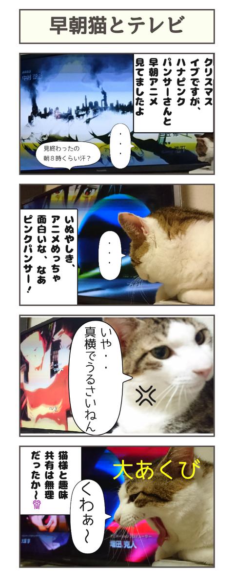 早朝猫とテレビ