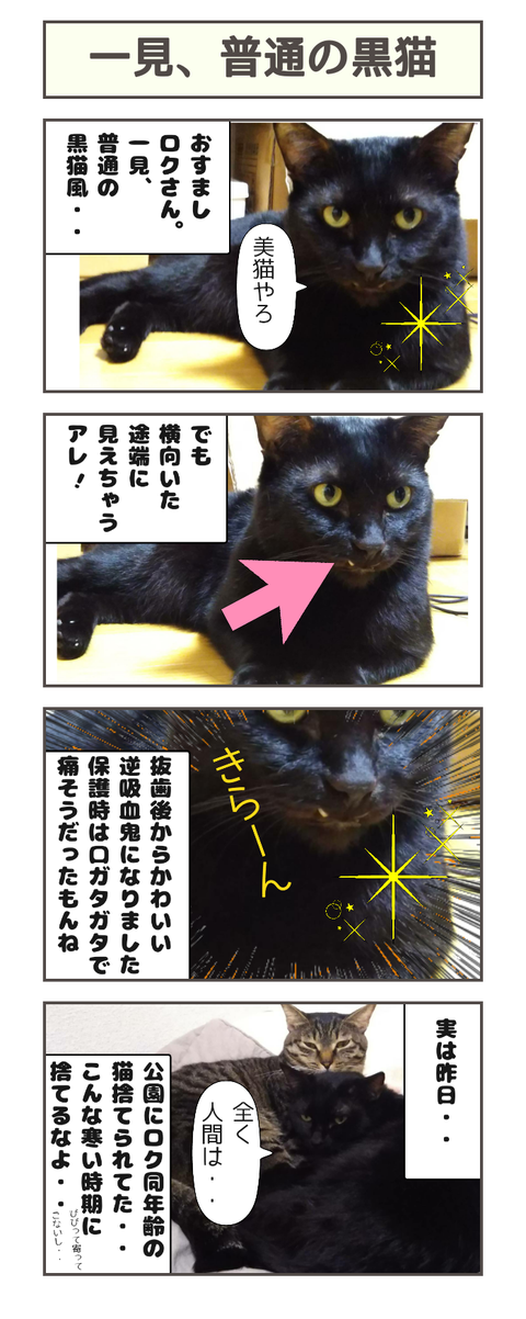 一見、普通の黒猫風
