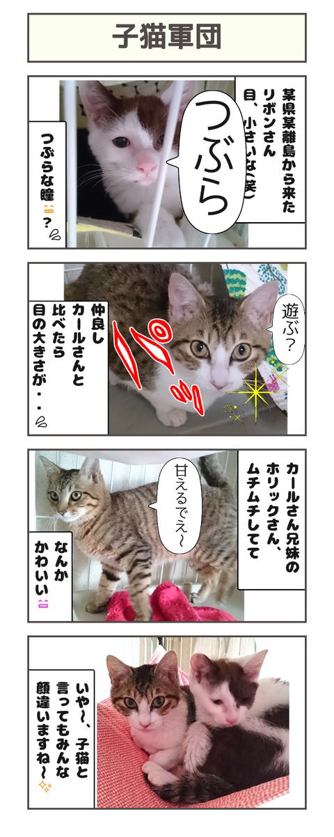 子猫軍団20200323132329