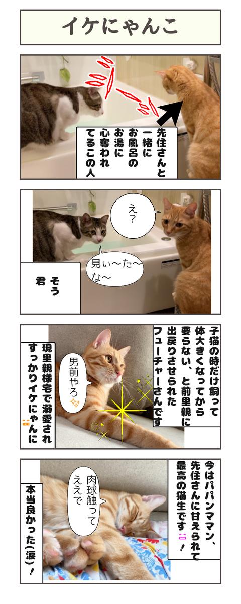 イケにゃんこ20190921102323