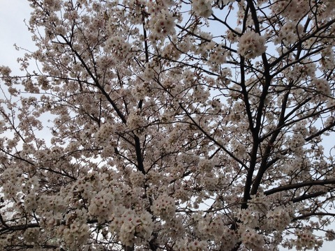 2014-03-31-17-35-36