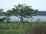 5月の湖畔の木と陽光