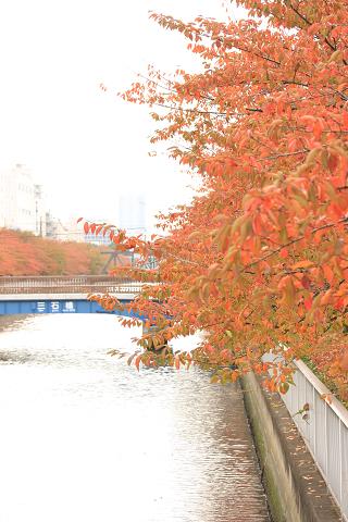 大横川の紅葉_2008