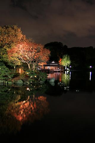 清澄庭園紅葉ライトアップ_2008
