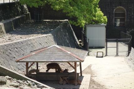 6-稲佐山DSC00102