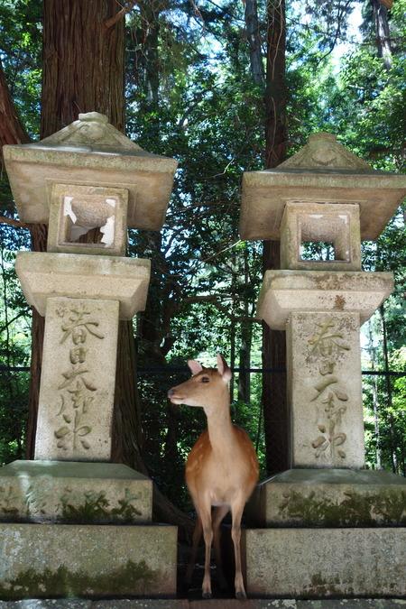 5-奈良神社DSC09253