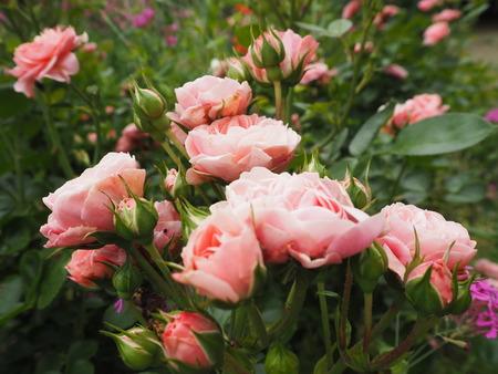 17-諫早市栗面町 Mai's garden P5171422