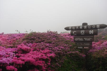 9-雲仙 仁田峠 ミヤマキリシマDSC06778