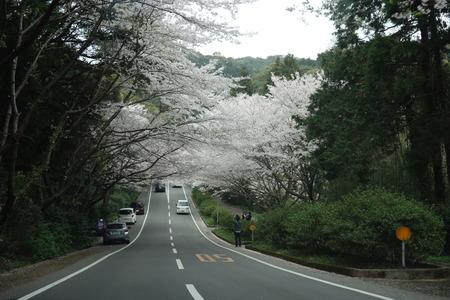 6−唐比の桜並木DSC01907