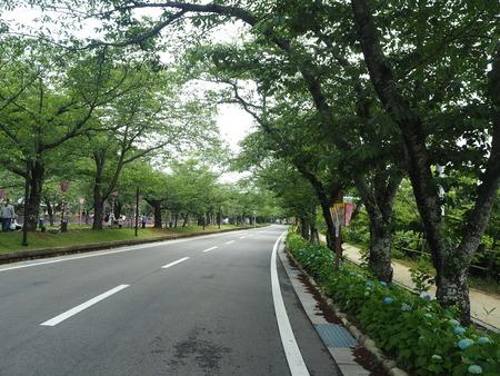 12-大村公園 花菖蒲PP5310119