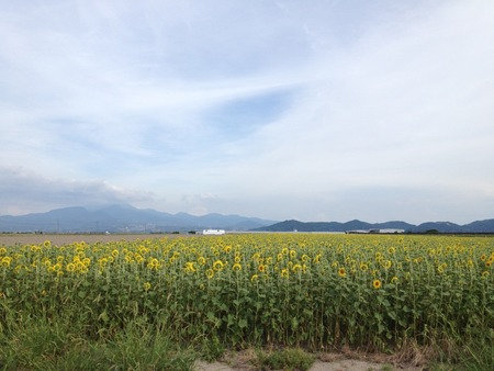 himawari-1IMG_0240