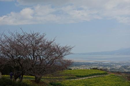 13−白木峰高原 桜DSC01580