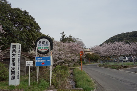 6-長崎農業大学DSC05733